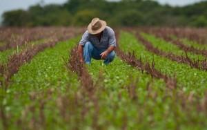 produtor-rural-31