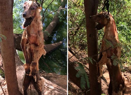 cachorro-enforcado-brumado-noticias-95