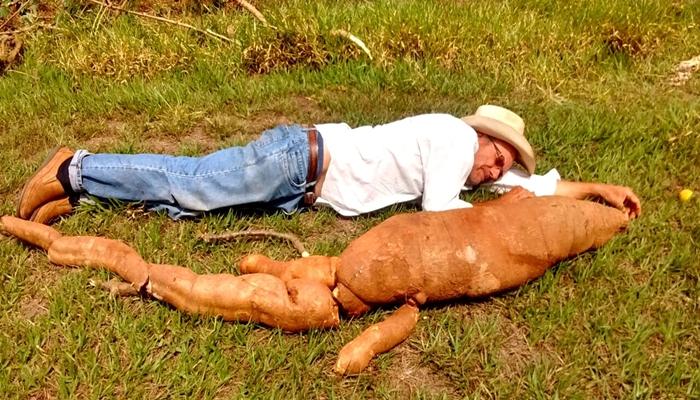 agricultor-se-surpreende-com-tamanho-de-mandioca-colhida1509272651